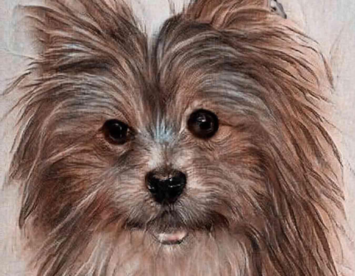 Cazarratas perro pequeño pero feroz Warhammer